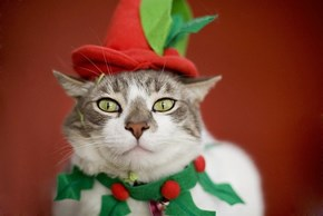 The 25 Days of Catmas: Spreading Good Tidings and Fear...I Mean Cheer!