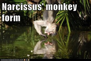 Narcissus' monkey form