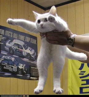 Longcat...