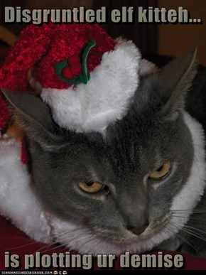 Disgruntled elf kitteh...  is plotting ur demise