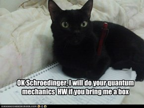 The Story Behind Schroedinger's Cat
