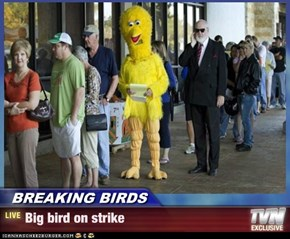 BREAKING BIRDS - Big bird on strike