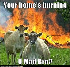 Your home's burning  U Mad Bro?