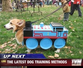 UP NEXT - THE LATEST DOG TRAINING METHODS