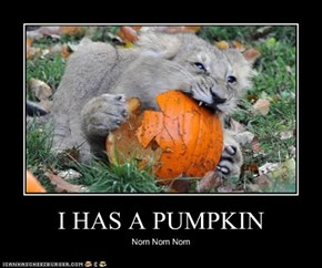 I HAS A PUMPKIN