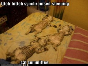 Itteh-bitteh synchronised-sleeping                        cat committee