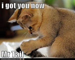 i got you now  Mr Tail