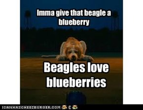 Beagles love blueberries