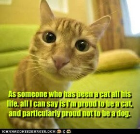 As someone who has been a cat all his life, all I can say is I'm proud to be a cat, and particularly proud not to be a dog.