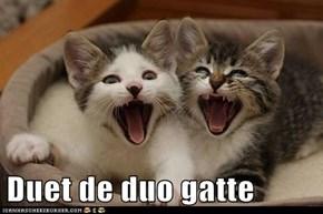Duet de duo gatte