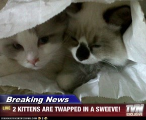 Breaking News - 2 KITTENS ARE TWAPPED IN A SWEEVE!