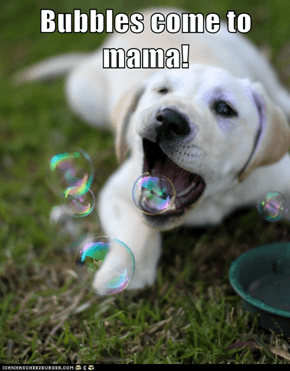 Bubbles come to mama!