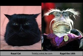 Royal Cat Totally Looks Like Rygel the 16th