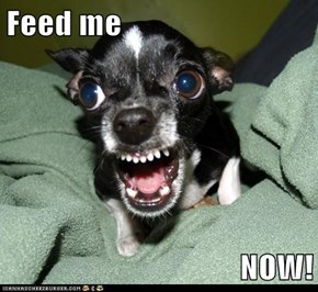 Feed me  NOW!