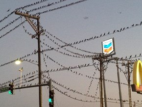 Bird-pocalypse