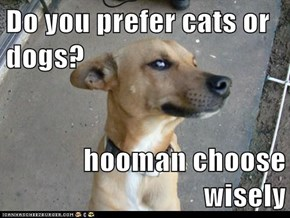 Do you prefer cats or dogs?  hooman choose wisely