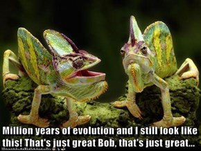 Million years of evolution and I still look like this! That's just great Bob, that's just great...