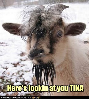 Here's lookin at you TINA