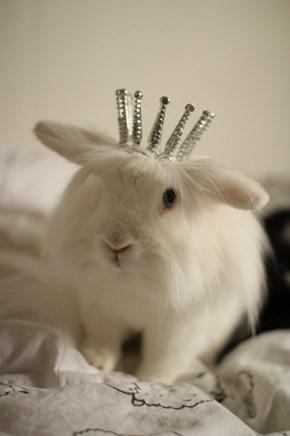 Bunday: Queen Bun