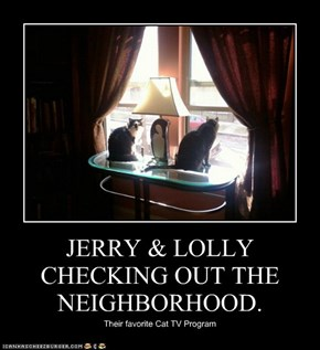 JERRY & LOLLY CHECKING OUT THE NEIGHBORHOOD.