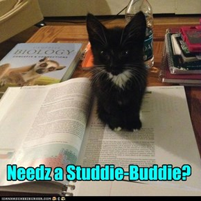 Needz a Studdie-Buddie?