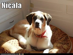 Nicala