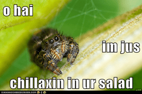 o hai im jus chillaxin in ur salad
