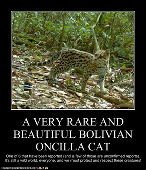 A VERY RARE AND BEAUTIFUL BOLIVIAN ONCILLA CAT