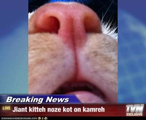 Breaking News - Jiant kitteh noze kot on kamreh