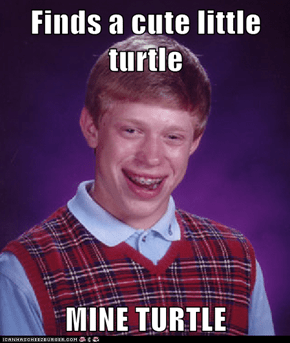 Finds a cute little turtle  MINE TURTLE