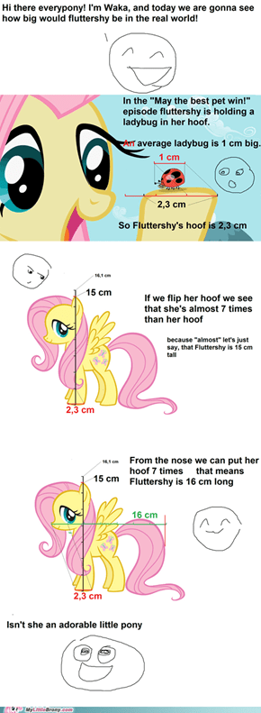 An average Fluttershy's size