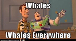 Whales  Whales Everywhere