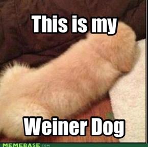 Weiner dog