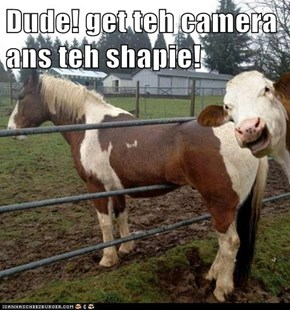 Dude! get teh camera ans teh shapie!