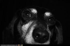 My weenie dog Fritzy:)