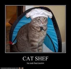 CAT SHEF