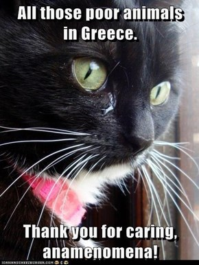 All those poor animals     in Greece.  Thank you for caring, anamenomena!