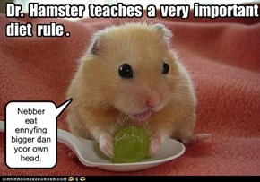 Dr.  Hamster  teaches  a  very  important  diet  rule .