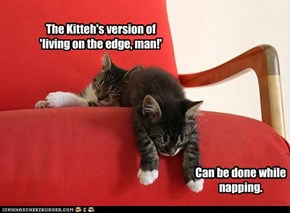 Yet another reason why it is better to be a kitteh...