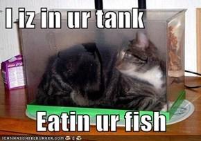 I iz in ur tank  Eatin ur fish