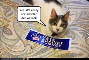 Cats Rule. Romney drools.