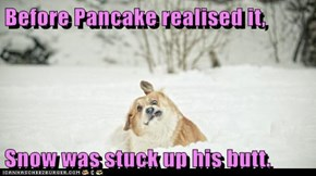 Before Pancake realised it,  Snow was stuck up his butt.