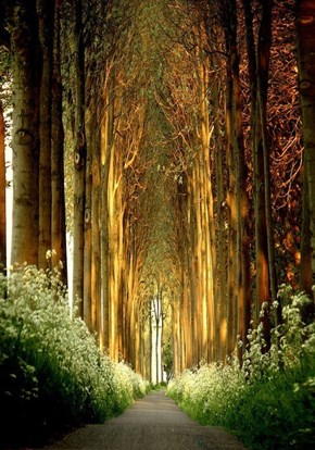 A Tree Tunnel In Belgium