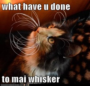 what have u done  to mai whisker