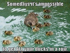 Somedays it's impossible  to get ALL your ducks in a row.