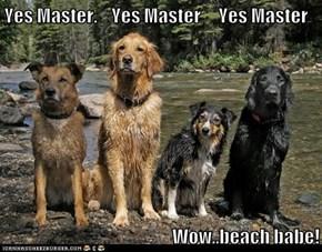 Yes Master.    Yes Master     Yes Master  Wow..beach babe!