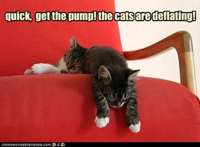 quick,  get the pump! the cats are deflating!