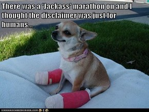 There was a 'Jackass' marathon on and I thought the disclaimer was just for humans...