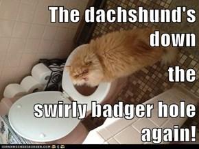 The dachshund's down the swirly badger hole again!