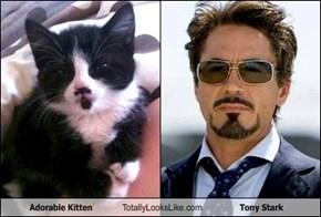 Adorable Kitten Totally Looks Like Tony Stark